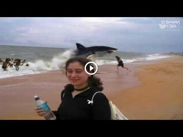German Backpacker Shark Attack On Australian Beach Real Or Fake